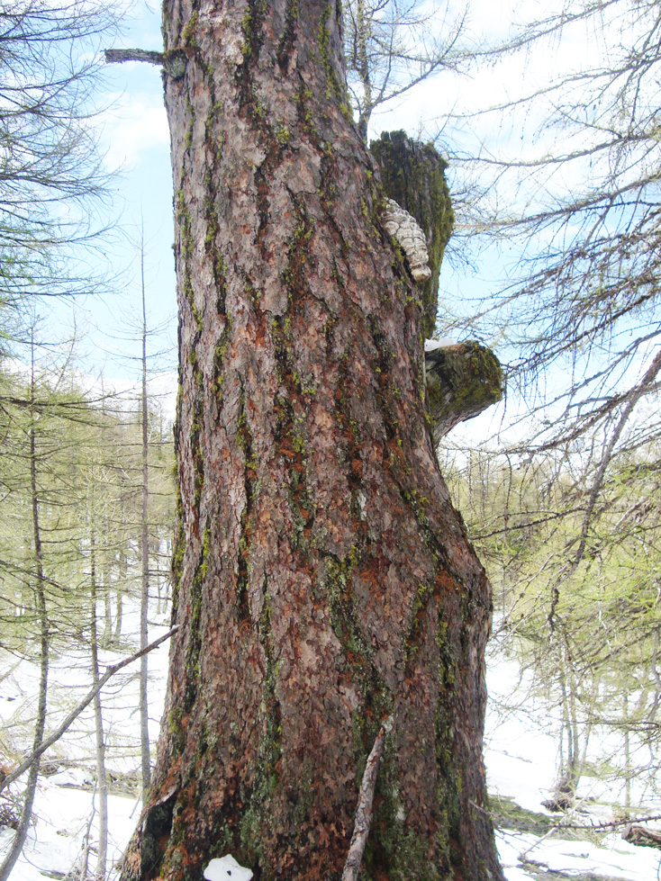 Conservation-et-valorisation-d-arbres-1
